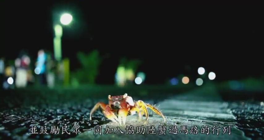 陸蟹圖片-3